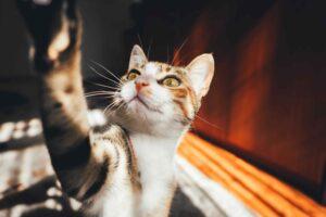 Meer vrijheid voor je kat